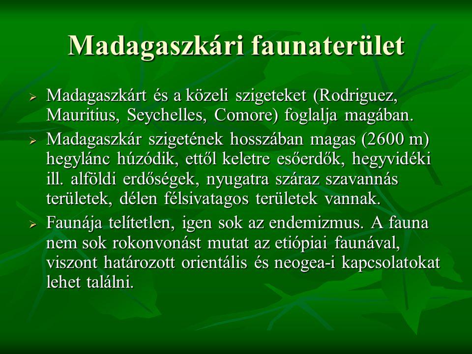 Madagaszkári faunaterület