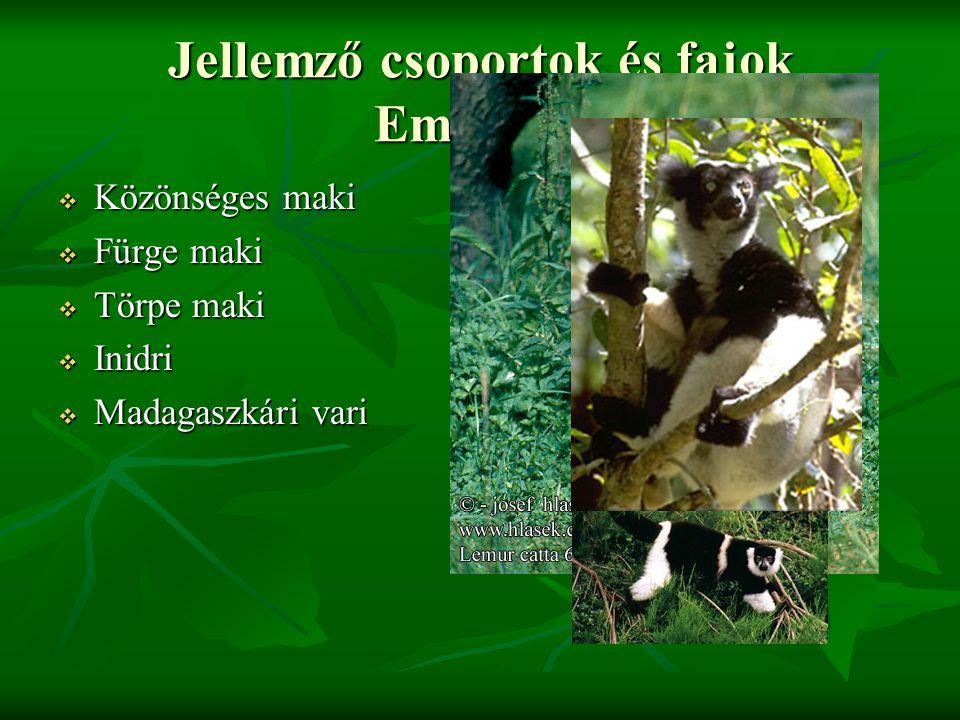Jellemző csoportok és fajok Emlősők: