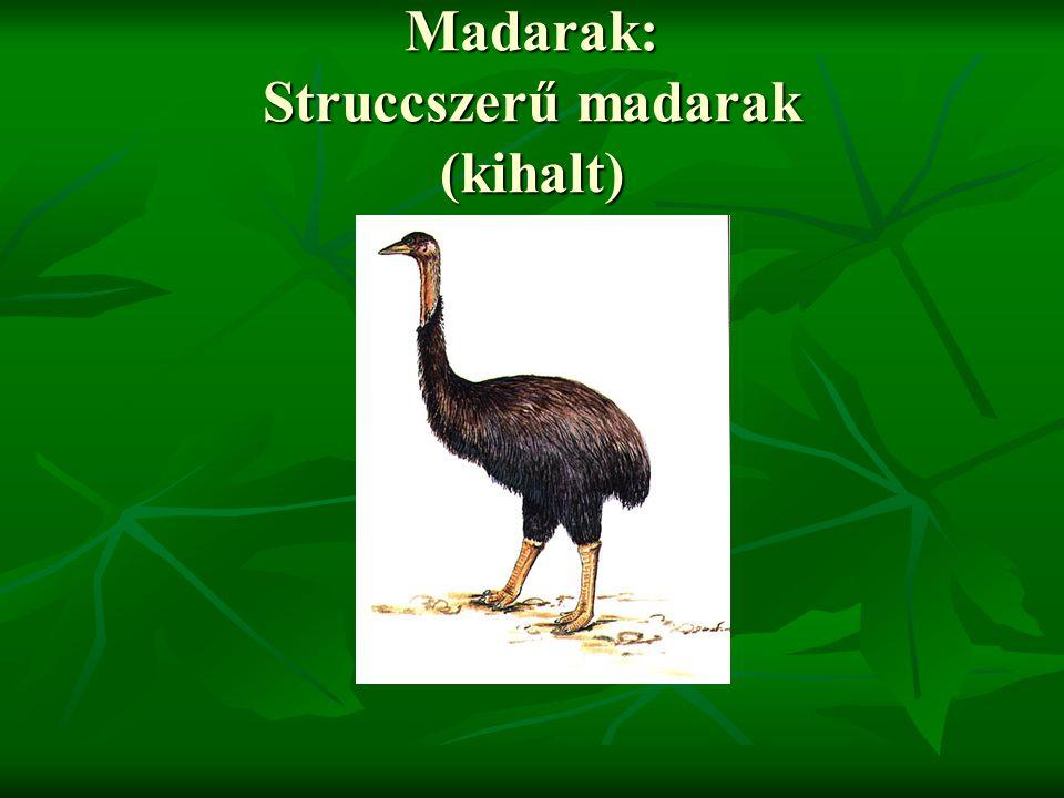 Madarak: Struccszerű madarak (kihalt)