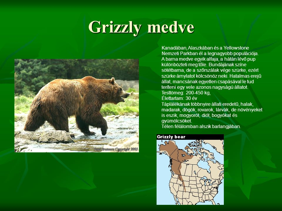 Grizzly medve