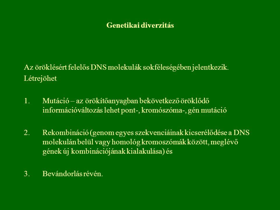 Genetikai diverzitás Az öröklésért felelős DNS molekulák sokféleségében jelentkezik. Létrejöhet.