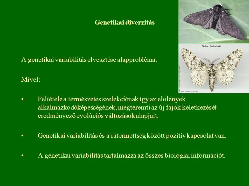 Genetikai diverzitás A genetikai variabilitás elvesztése alapprobléma. Mivel: