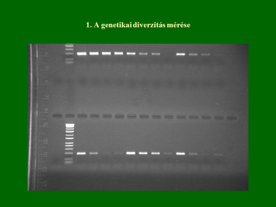 1. A genetikai diverzitás mérése