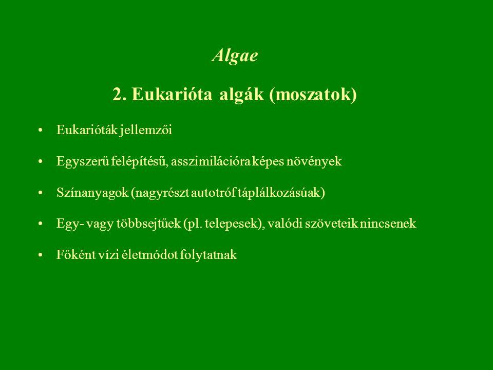 2. Eukarióta algák (moszatok)