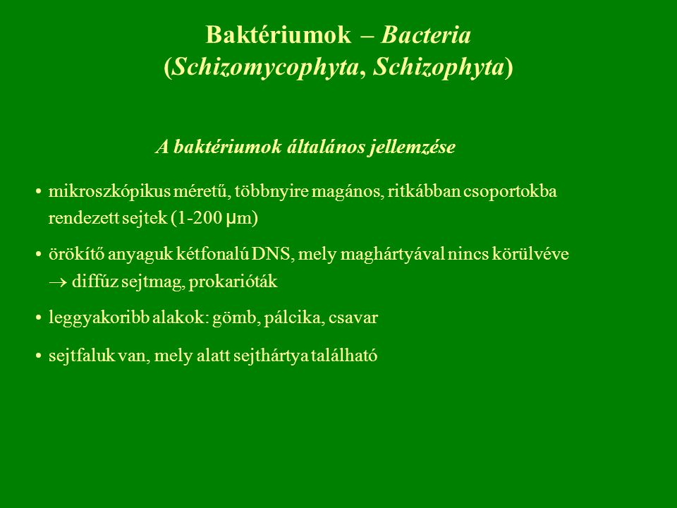 Baktériumok – Bacteria (Schizomycophyta, Schizophyta)