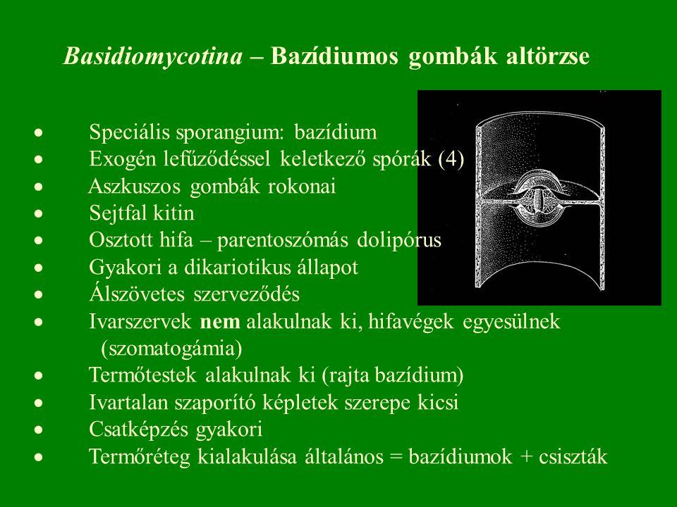 Basidiomycotina – Bazídiumos gombák altörzse