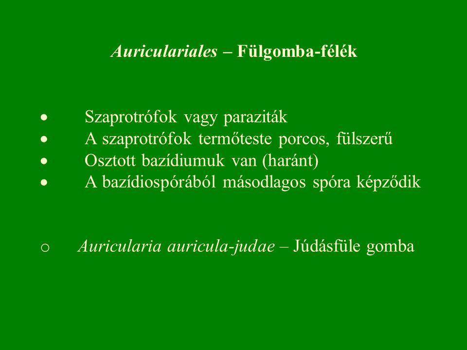 Auriculariales – Fülgomba-félék