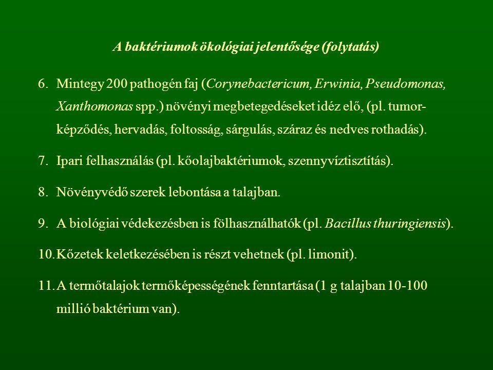 A baktériumok ökológiai jelentősége (folytatás)