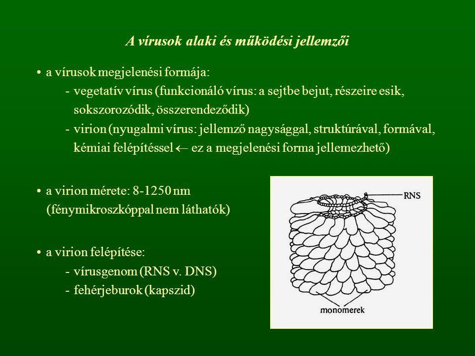 A vírusok alaki és működési jellemzői