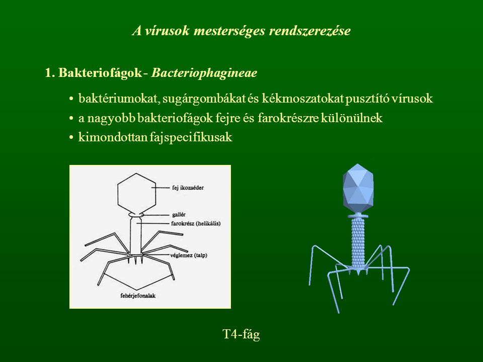 A vírusok mesterséges rendszerezése