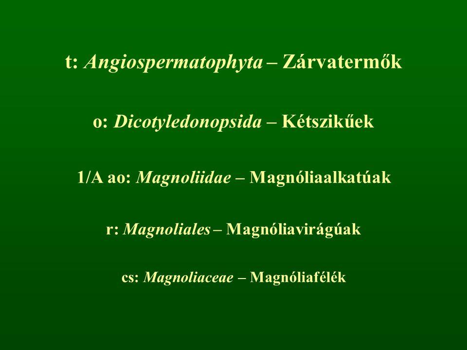 t: Angiospermatophyta – Zárvatermők