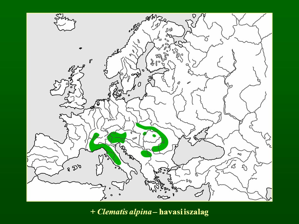 + Clematis alpina – havasi iszalag