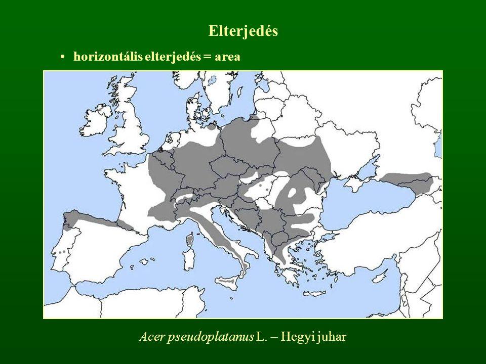 Acer pseudoplatanus L. – Hegyi juhar