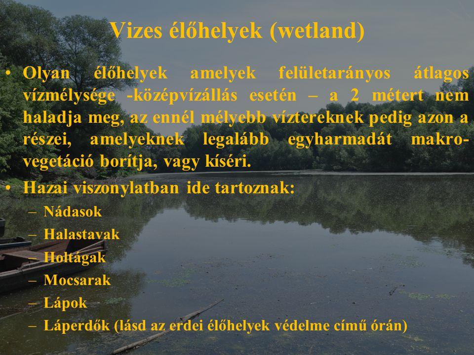 Vizes élőhelyek (wetland)