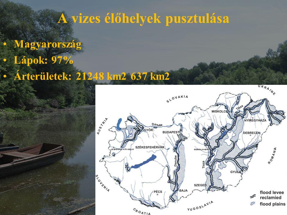 A vizes élőhelyek pusztulása
