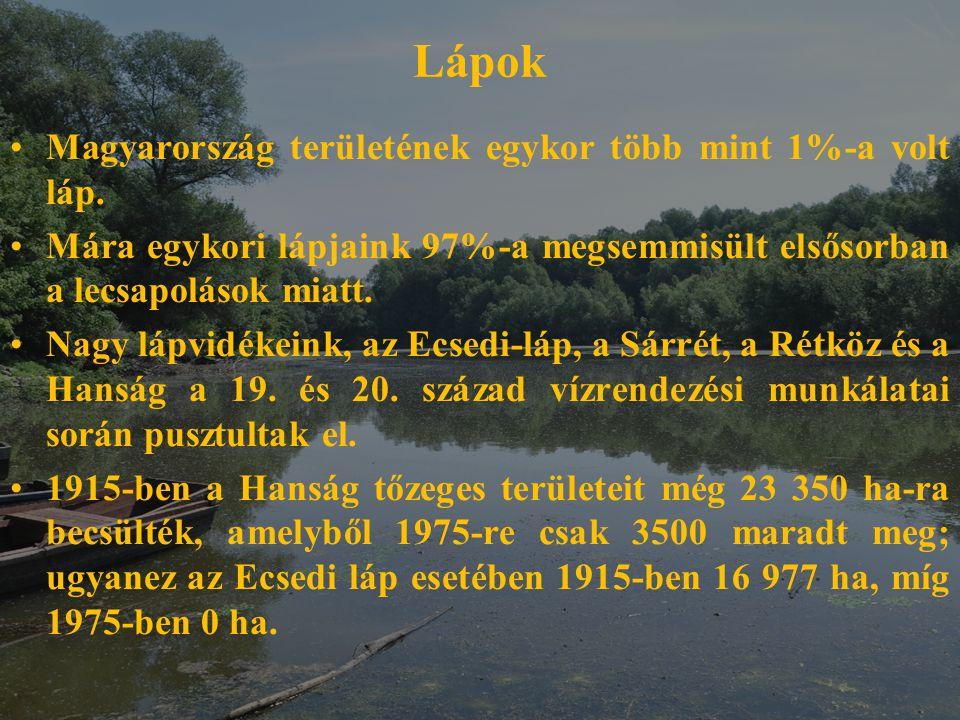 Lápok Magyarország területének egykor több mint 1%-a volt láp.