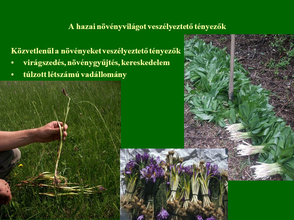 A hazai növényvilágot veszélyeztető tényezők