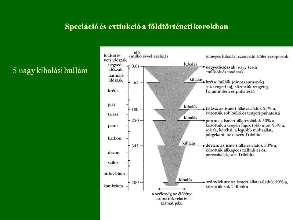 Speciáció és extinkció a földtörténeti korokban
