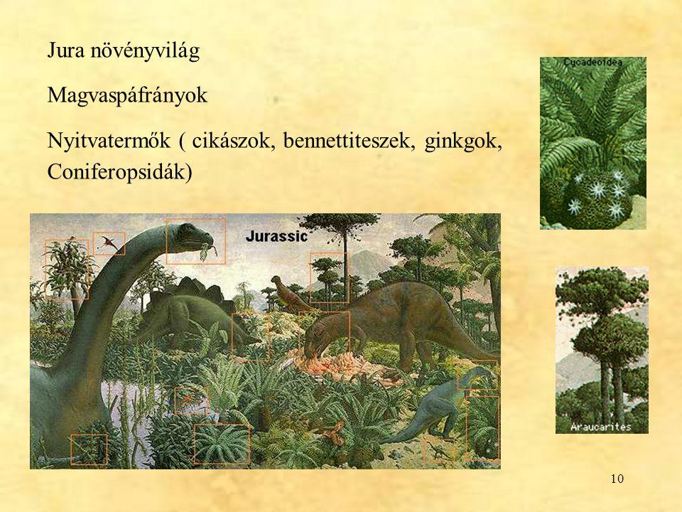 Jura növényvilág Magvaspáfrányok Nyitvatermők ( cikászok, bennettiteszek, ginkgok, Coniferopsidák)