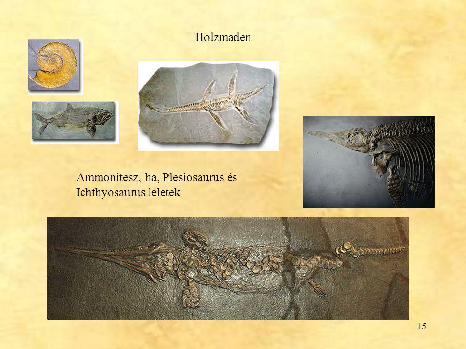 Holzmaden Ammonitesz, ha, Plesiosaurus és Ichthyosaurus leletek