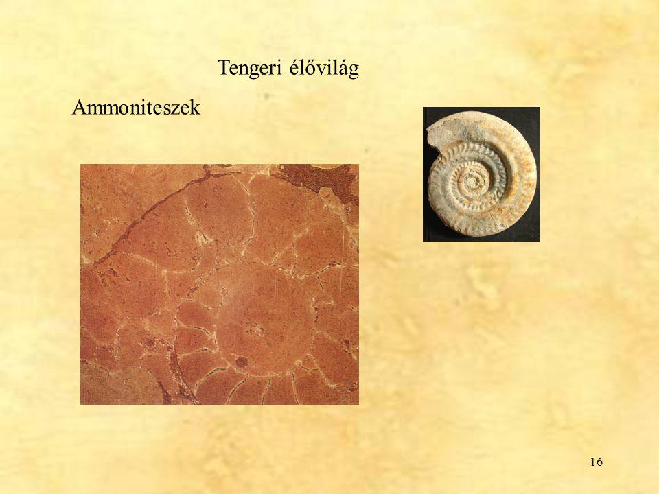 Tengeri élővilág Ammoniteszek