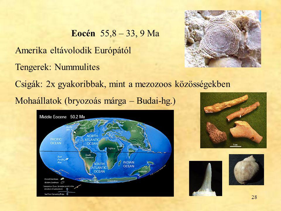Eocén 55,8 – 33, 9 Ma Amerika eltávolodik Európától. Tengerek: Nummulites. Csigák: 2x gyakoribbak, mint a mezozoos közösségekben.