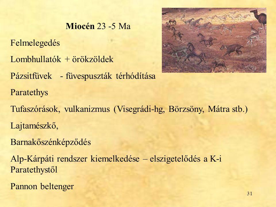 Miocén 23 -5 Ma Felmelegedés. Lombhullatók + örökzöldek. Pázsitfüvek - füvespuszták térhódítása.