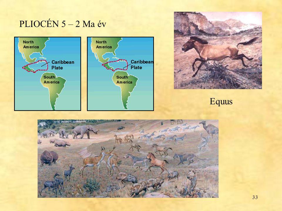PLIOCÉN 5 – 2 Ma év Equus