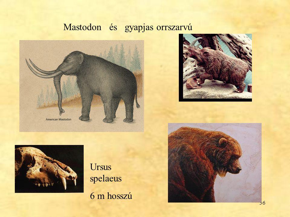 Mastodon és gyapjas orrszarvú