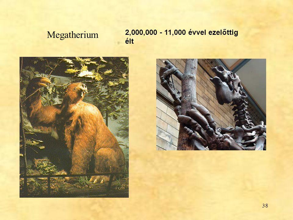 Megatherium 2,000,000 - 11,000 évvel ezelőttig élt