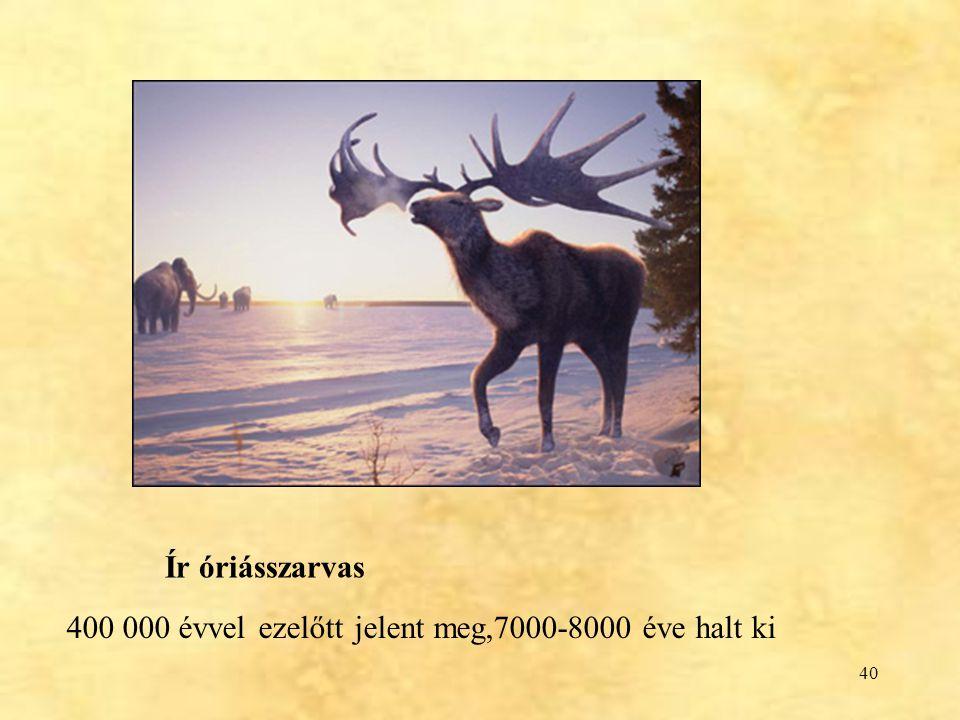 Ír óriásszarvas 400 000 évvel ezelőtt jelent meg,7000-8000 éve halt ki