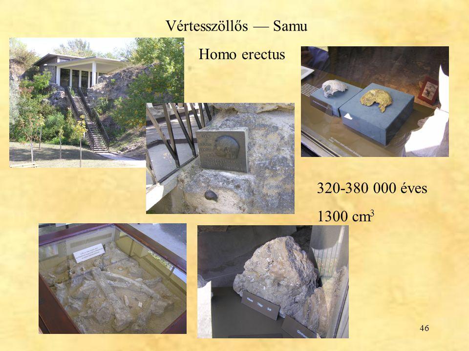Vértesszöllős — Samu Homo erectus 320-380 000 éves 1300 cm3