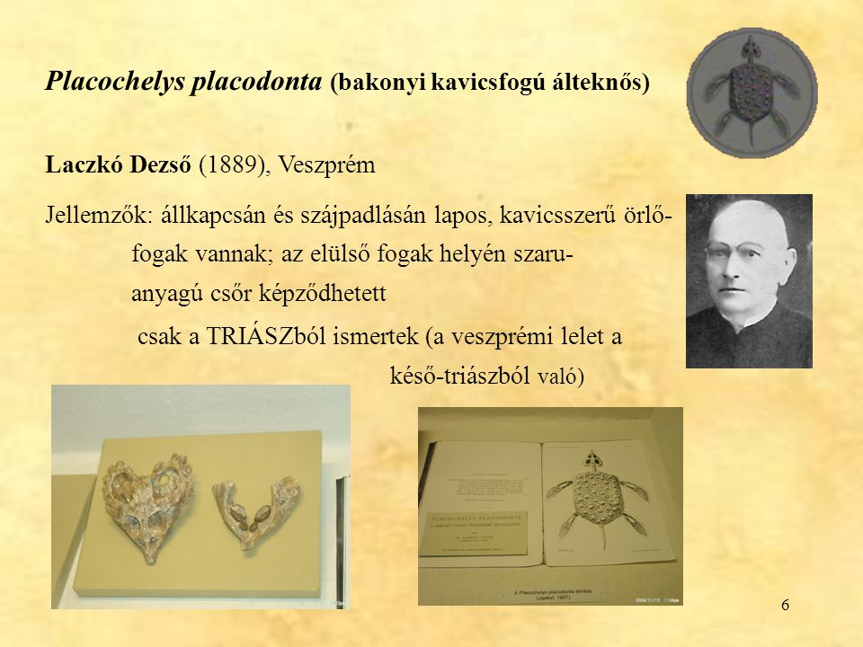 Placochelys placodonta (bakonyi kavicsfogú álteknős)