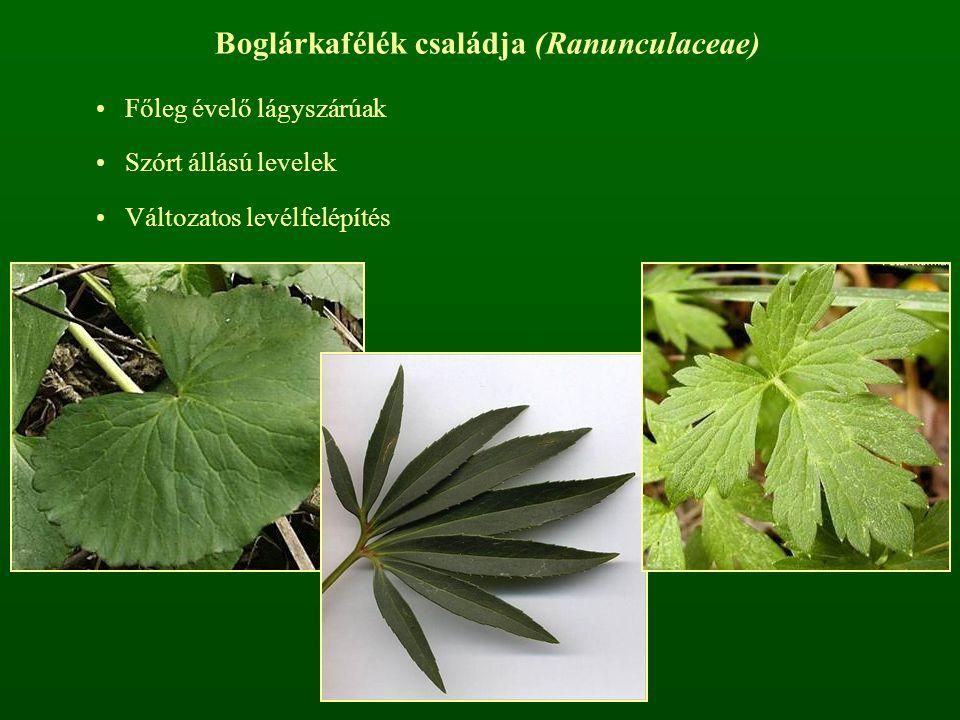 Boglárkafélék családja (Ranunculaceae)