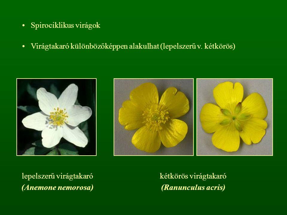 lepelszerű virágtakaró