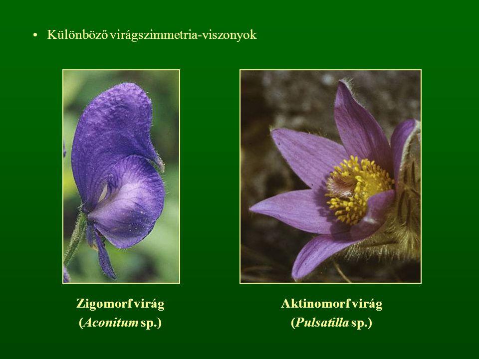 Különböző virágszimmetria-viszonyok