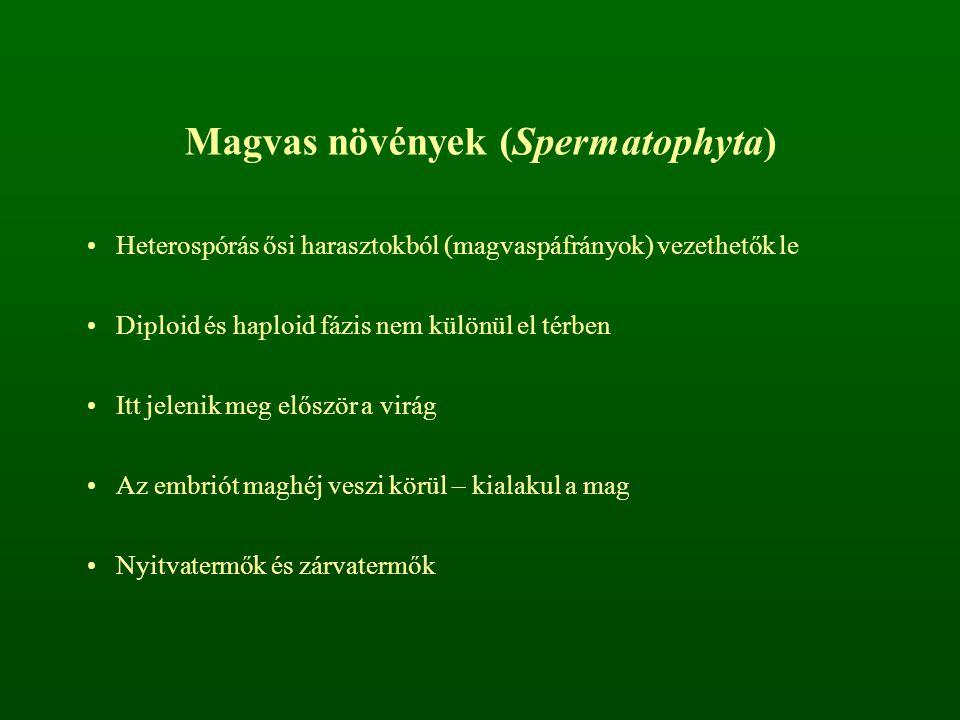 Magvas növények (Spermatophyta)