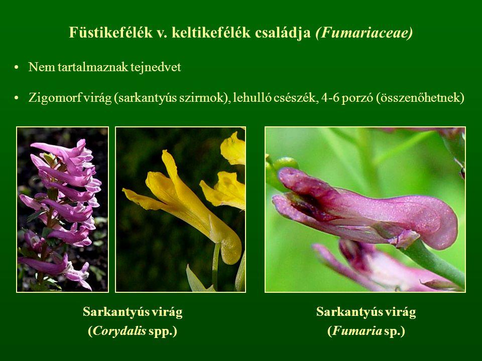 Füstikefélék v. keltikefélék családja (Fumariaceae)