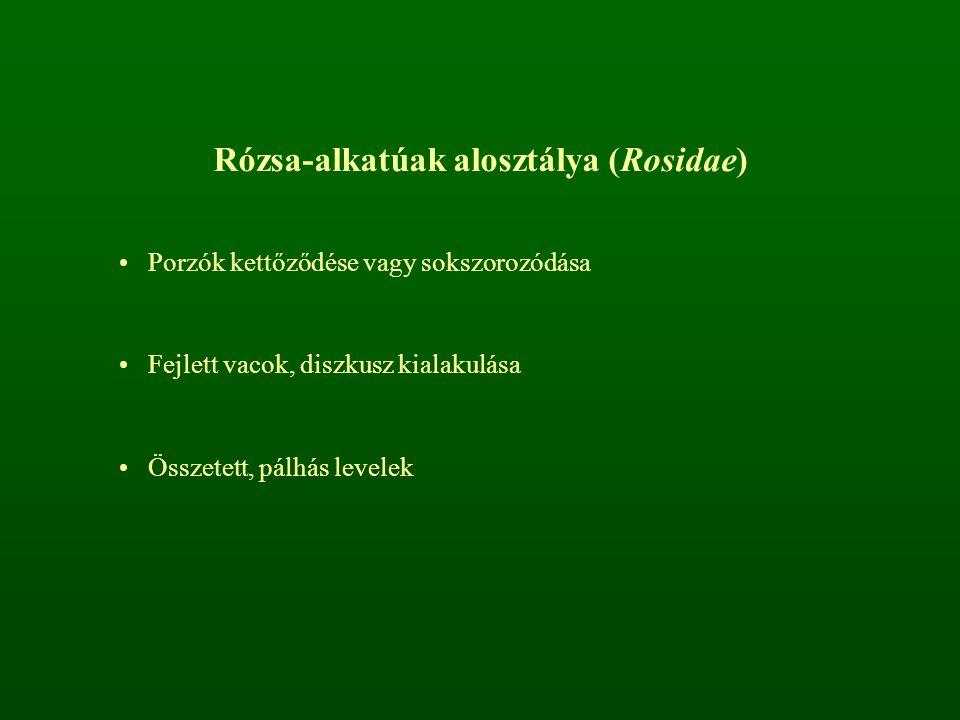 Rózsa-alkatúak alosztálya (Rosidae)