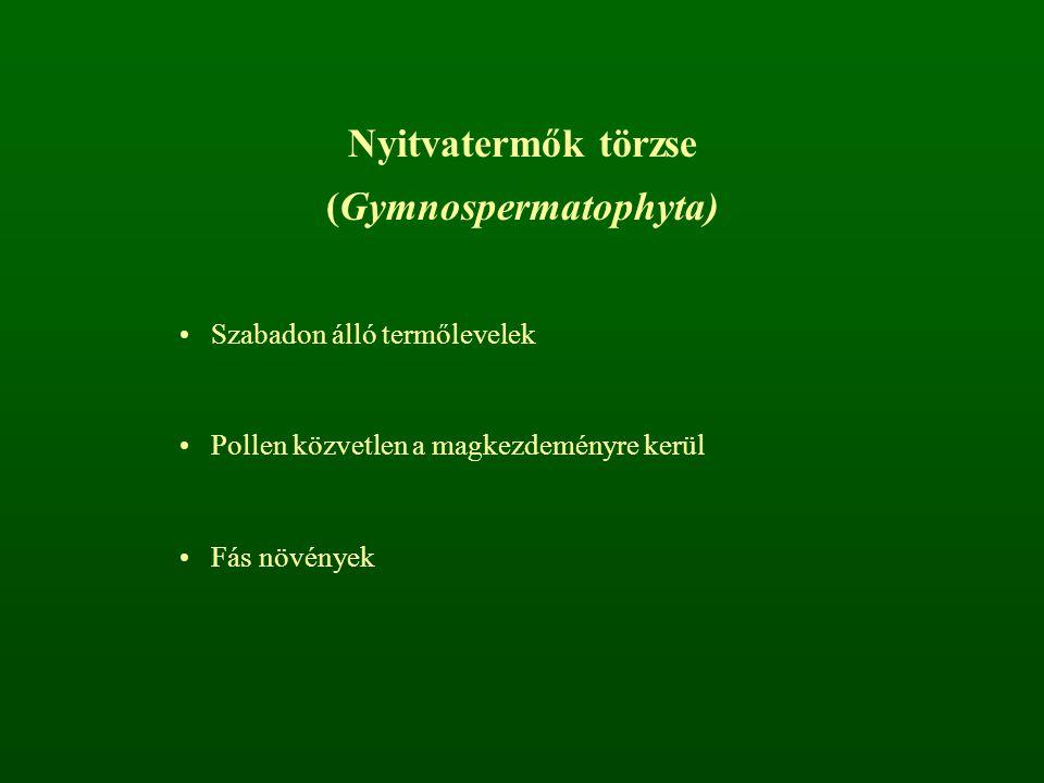 (Gymnospermatophyta)