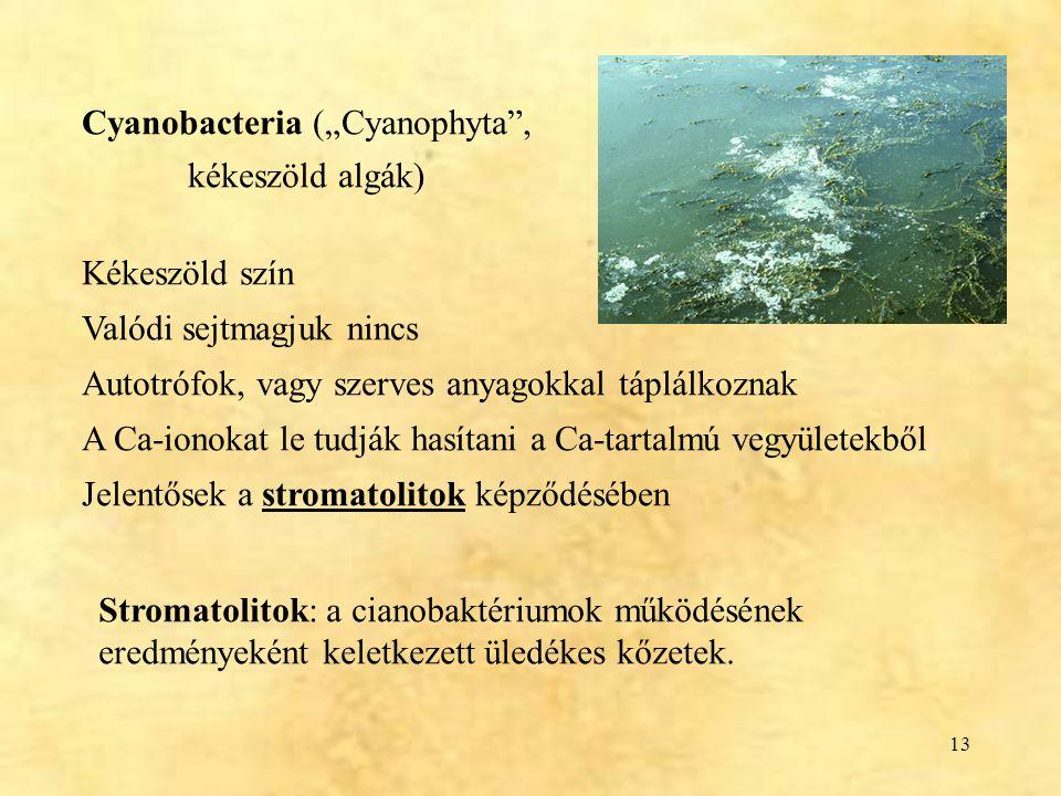 """Cyanobacteria (""""Cyanophyta ,"""