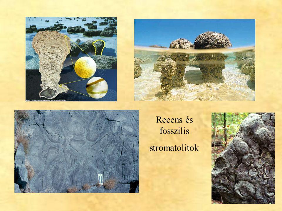 Recens és fosszilis stromatolitok