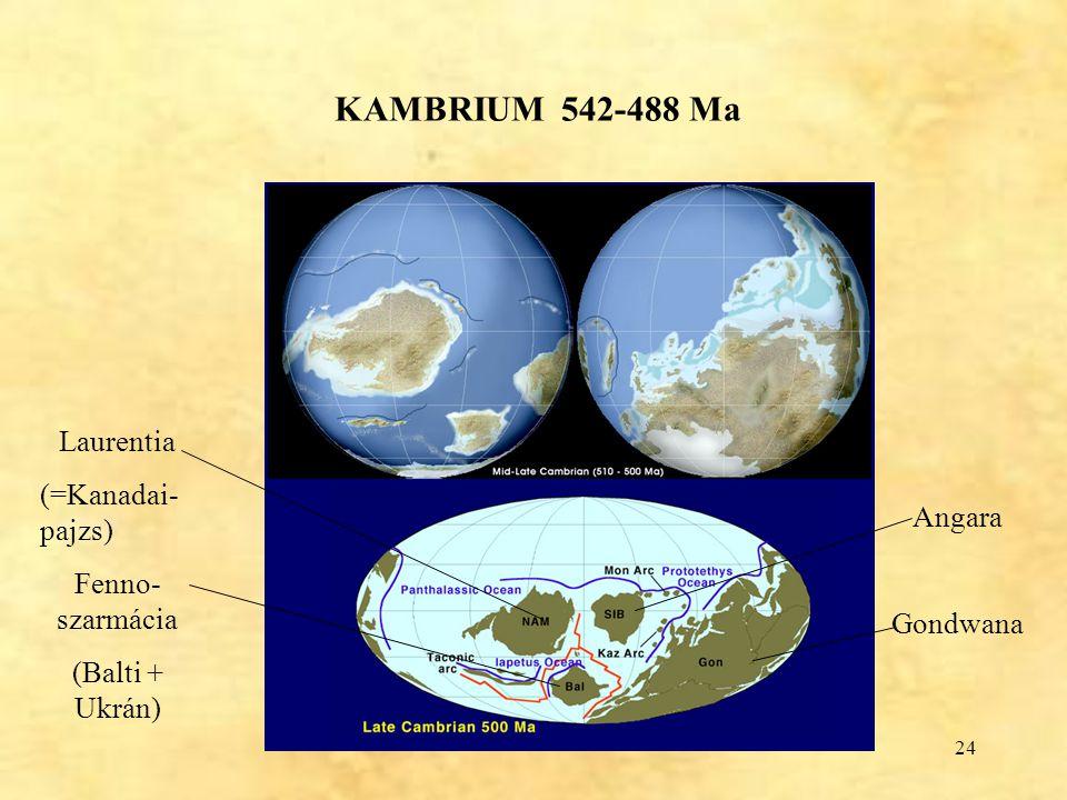KAMBRIUM 542-488 Ma Laurentia (=Kanadai-pajzs) Fenno-szarmácia Angara