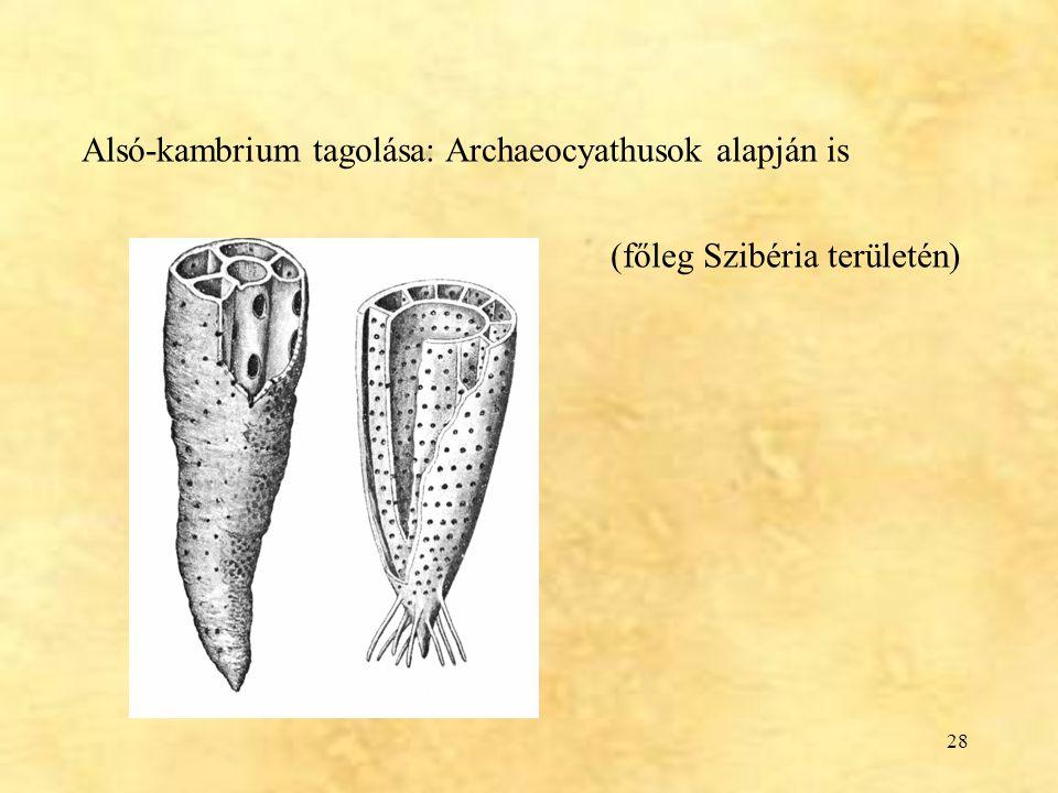 Alsó-kambrium tagolása: Archaeocyathusok alapján is