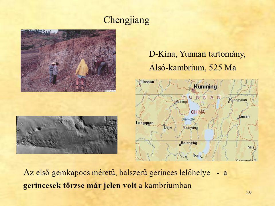 Chengjiang D-Kína, Yunnan tartomány, Alsó-kambrium, 525 Ma.