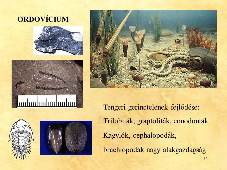ORDOVÍCIUM Tengeri gerinctelenek fejlődése: Trilobiták, graptoliták, conodonták. Kagylók, cephalopodák,