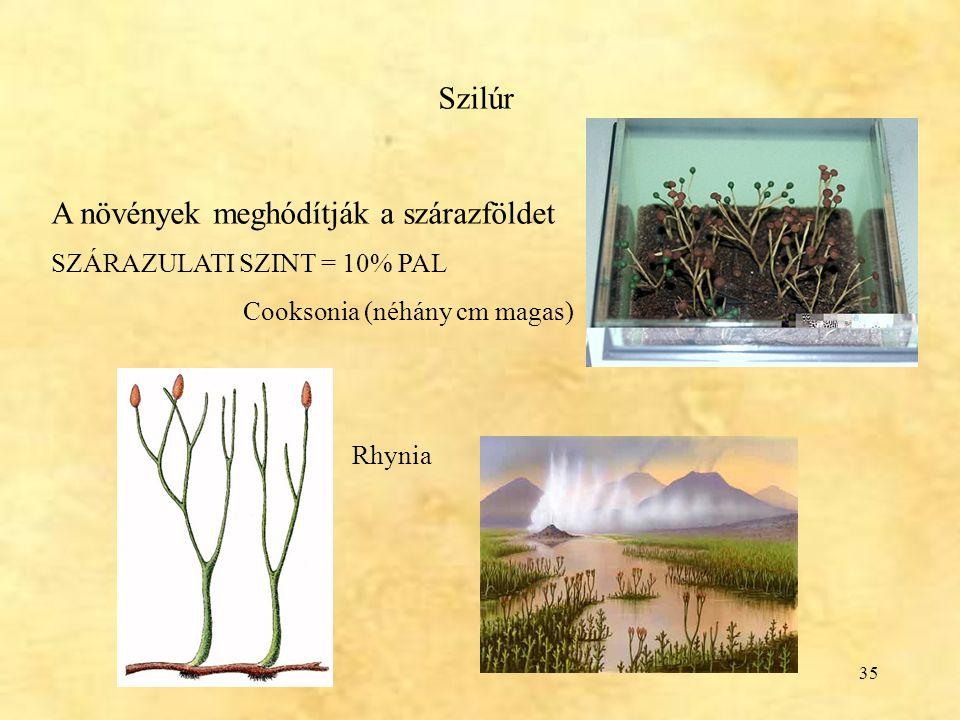 A növények meghódítják a szárazföldet