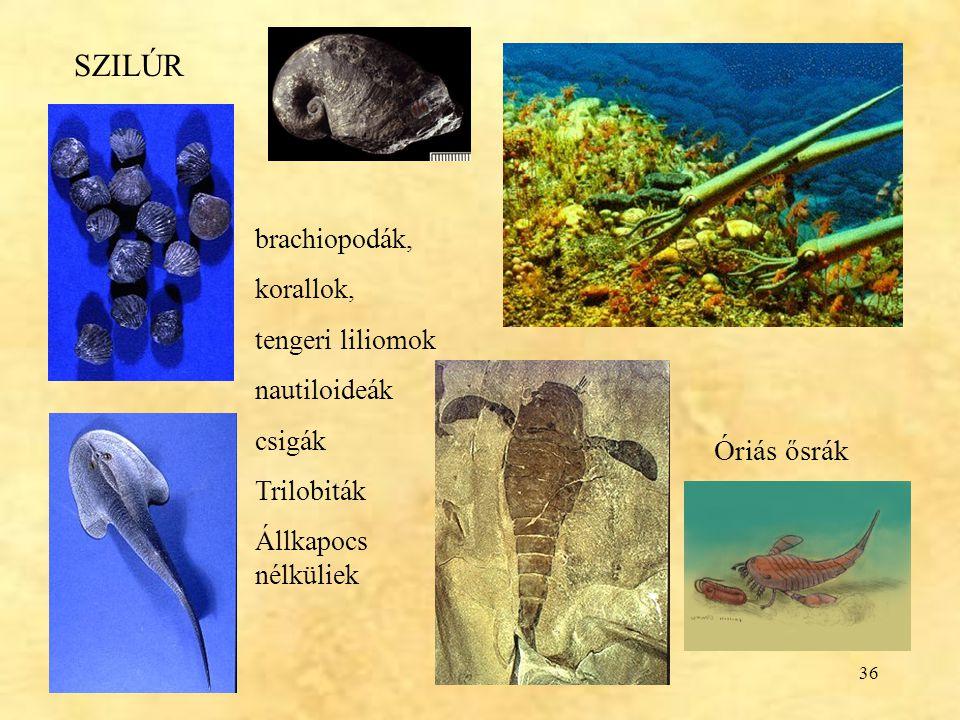 SZILÚR Óriás ősrák brachiopodák, korallok, tengeri liliomok