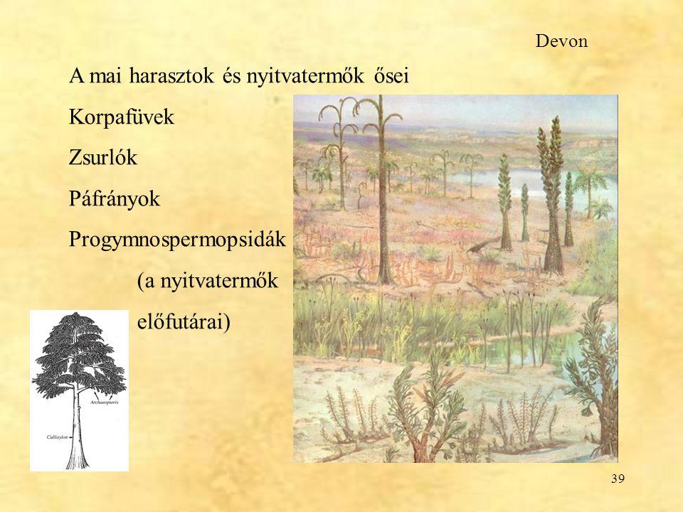 A mai harasztok és nyitvatermők ősei Korpafüvek Zsurlók Páfrányok