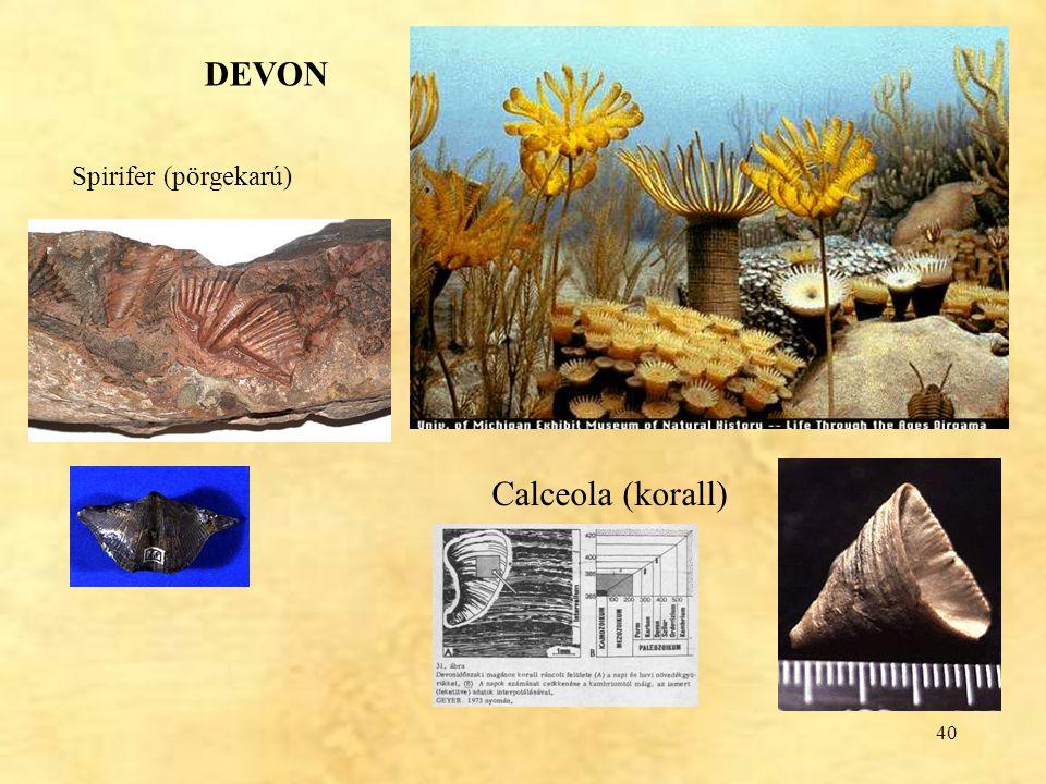 DEVON Spirifer (pörgekarú) Calceola (korall)
